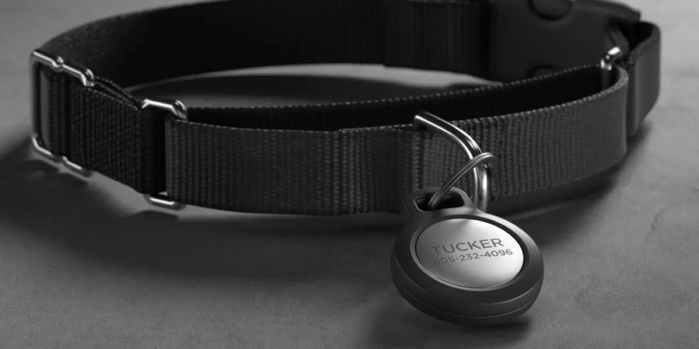 Some tips for buying a collar for your puppy